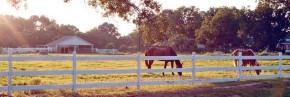 Pleasure Horse Photo 1